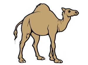 camel and needle